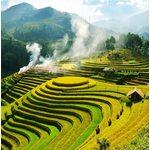 Обзор Вьетнамских мазей и польза их натурального состава