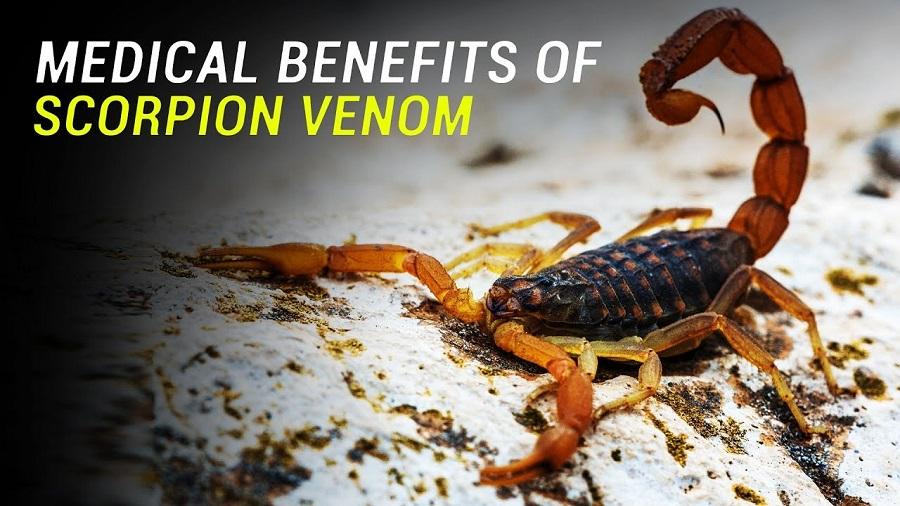 яд скорпиона в помощь мышцам