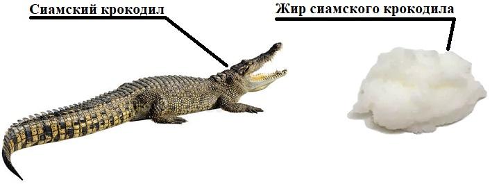 жир сиамского крокодила